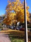 fall 015