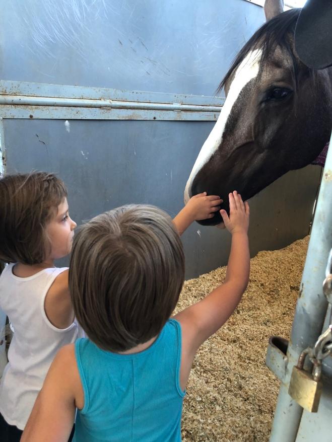 Tyko! Rodeo Queen's Horse