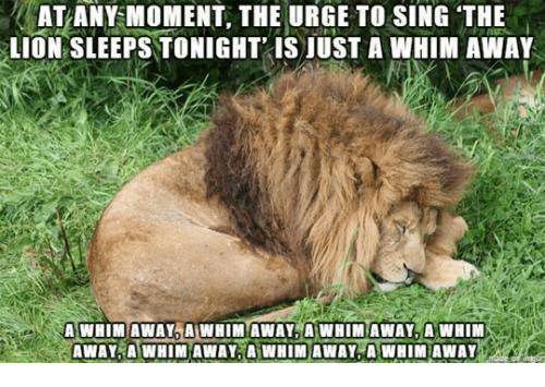 atany-moment-the-urge-to-sing-the-lion-sleeps-tonight-8891135